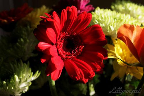 Red flower inside - inside photo challenge